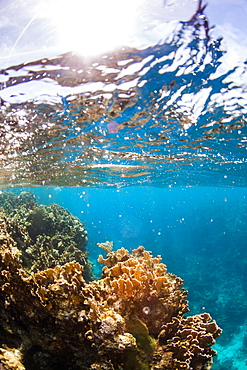 Split-level view of sky above and reef with coral underwater, West End, West Bay, Roatan, Honduras