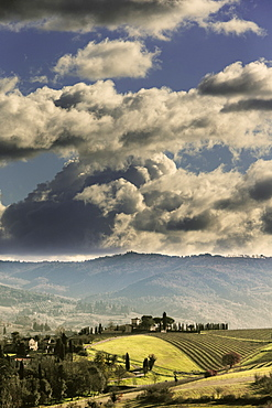 Typical Tuscan landsape with a vinyards and farmhouse under cloudy skies.