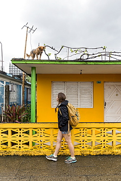 Side view of female tourist looking at dog on roof on street of Baracoa, Guantanamo Province, Cuba