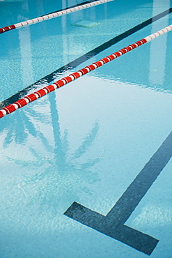 Detail of swimming pool line and shadow of palm tree reflected in water surface, Mallorca, Balearic Islands, Spain