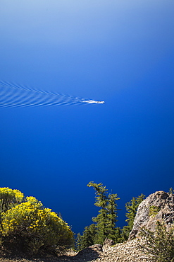 A tour boat anchors in the deep blue lake with fir trees at edge of frame, Crater Lake, Oregon, USA