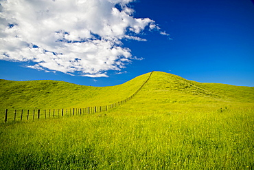 Wooden Fence Posts Running Through A Grassy Field; New Zealand