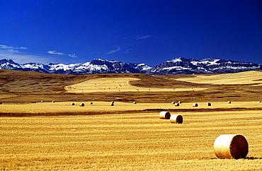 Harvested Wheat Field, Montana, Usa