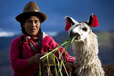 Peruvian Woman In Traditional Clothing With Llama In Cuzco, Peru
