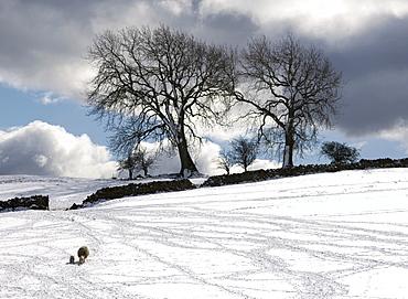 Snowy Field, Weardale, County Durham, England