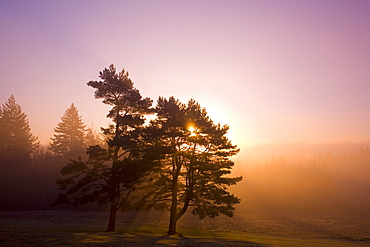 Sunrise Behind A Tree