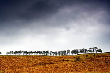 Row Of Trees In A Field, Yorkshire Dales, England