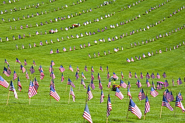 American Flags In A Graveyard During Memorial Day, Oregon, Usa