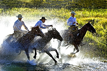 Cowboys Riding Horses Through Water