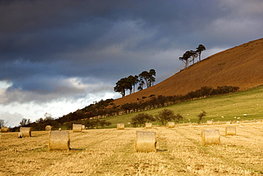 Hay Bales In A Field, Northumberland, England