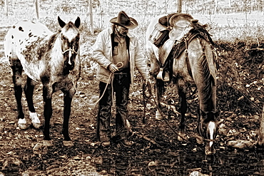 Cowboy Watering His Horses