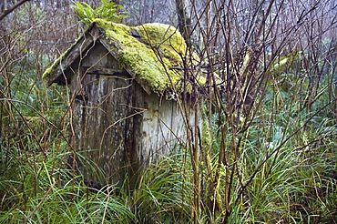 Outhouse, Tofino, British Columbia, Canada