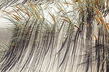 Grass, Guincho Beach, Portugal
