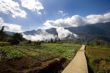 Gardens In The Picturesque Village Of Sapa, Northern Vietnam, Near The Chinese Border