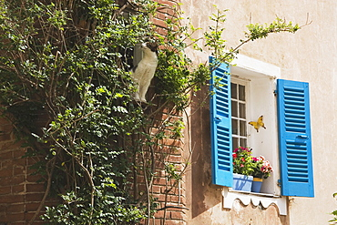 Side Of A Building With Blue Shutters