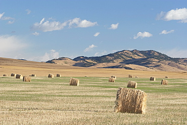 Hay Bales In The Foothills, Southern Alberta, Canada