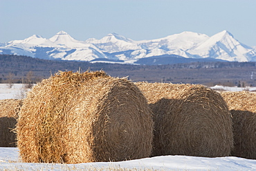 Hay Bales And Mountains, West Of Calgary, Alberta, Canada