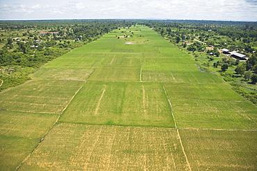 Rice Fields, Siem Reap, Cambodia