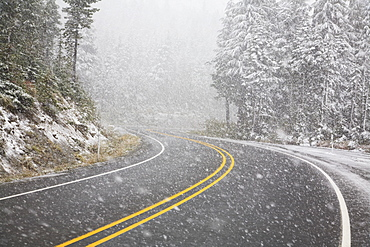 Road During A Snowfall