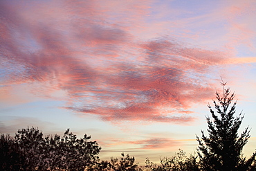 Oregon, United States Of America, Colorful Clouds At Sunrise And Silhouette Of Trees