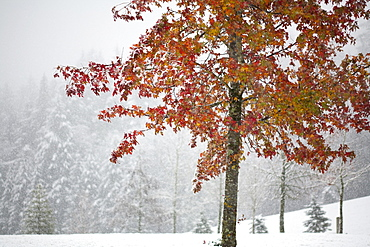 Falling Snow Over A Park Area