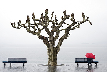 A tree and a person with a red umbrella at the water's edge, Ascona ticino switzerland