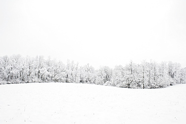 A line of trees on the edge of a field covered with snow, Ohio, united states of america