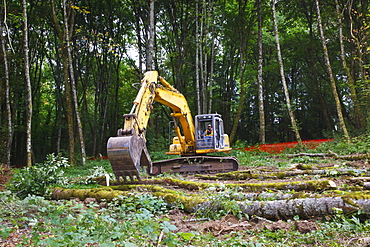 Backhoe Clearing A Forest, Portland, Oregon, United States of America