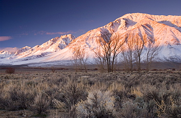 Sunrise On A Snowcapped Peak In The California Desert, Bishop, California, Usa