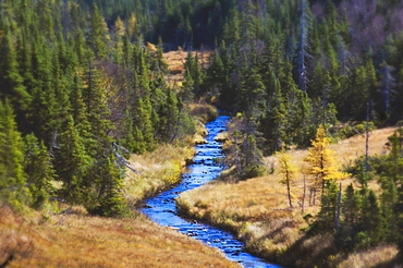 River Runs Through Spruce, Pine And Larch Forest Cape Breton Highlands National Park.