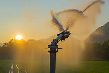 Watering The Lawn At Sunset, Locarno, Ticino, Switzerland