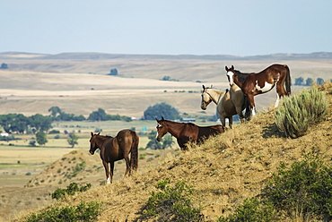 Horses Standing On A Slope Overlooking A Wide Open Space In Little Bighorn Valley, Montana, United States Of America