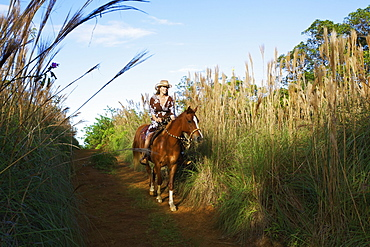 A Woman Rides Her Horse Down A Trail, Hawaii, United States Of America