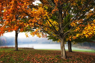 Trees On The Edge Of A Golf Course Shine In The Colours Of Autumn, Whitnall Park, Hales Corners, Wisconsin, United States Of America