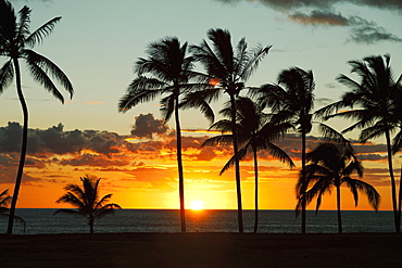 Silhouette Of Palm Trees Along The Shore At Sunset, Honolulu, Oahu, Hawaii, United States Of America