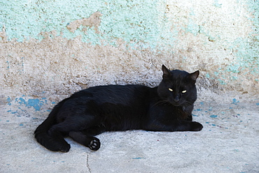 Black Cat Resting Against A Blue-Grey Wall, Valparaiso, Chile