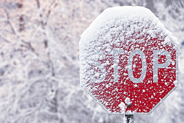 Stop Sign Covered With Snow In Winter, Limehouse, Ontario, Canada