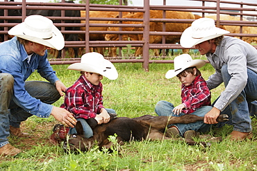Livestock - A couple cowboys teaching two young boys how to hold down a beef calf in a traditional manner so it can be vaccinated and branded / near Childress, Texas, USA.