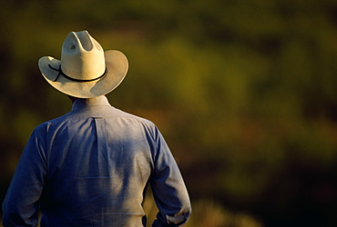 Agriculture - View of a cowboy from behind / Cee Vee, Texas, USA.