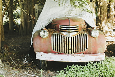 A Vintage Car Sitting Under Large Trees Covered With A Tarp, Pemberton, British Columbia, Canada