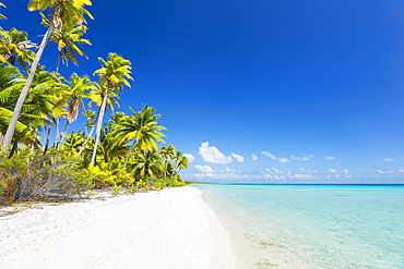 Tropical Sunny Island With Palm Trees And Blue Ocean, Tikehau, French Polynesia