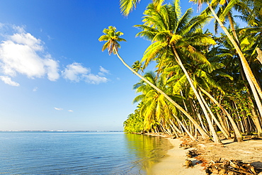 Tropical Island With Palm Trees And Blue Ocean, Raiatea, French Polynesia
