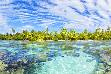Tropical Reef In The Coral Gardens, Tahaa, French Polynesia