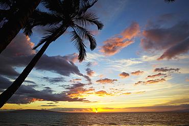 Silhouette Of Palm Trees At Sunset At Keawekapu Beach, Kihei, Maui, Hawaii, United States Of America