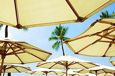Hawaii, Kauai, A Group Of Umbrellas On The Beach.