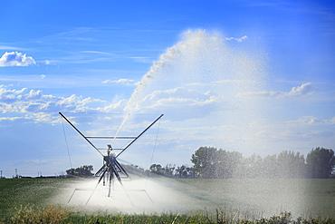 Center Pivot Irrigation Spraying Water, Near Lethbridge, Alberta, Canada