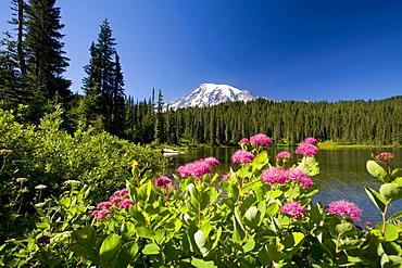 Wildflowers, Mount Rainier, Mount Rainier National Park, Washington, United States Of America