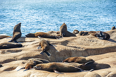 Sea Lions Basking In The Sun On A Rock, Cabo Polonio, Uruguay