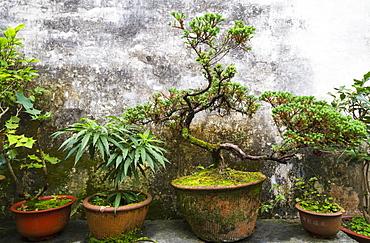 Potted Plants In Ruiyu Courtyard, Xidi, Anhui, China
