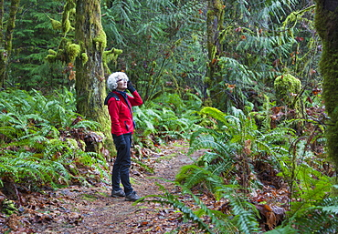 A Mature Woman On A Cell Phone Hiking In The Rainforest In The Cowichan Valley, British Columbia, Canada